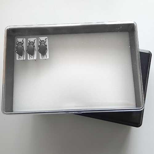 Prepravná škatuľa s ukážkou uloženia hmyzu.